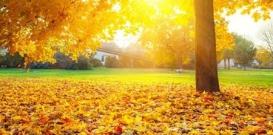 枯黄的落叶