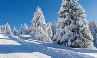 那年冬天的雪