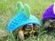 """小乌龟-""""米米"""""""